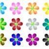 fiori colorati – coloured flowers
