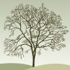 albero autunnale – autumn tree