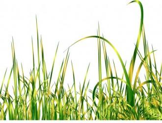erba – grass