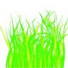 erba – grass_1