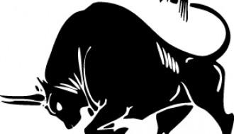 toro – bull