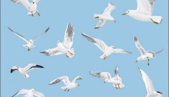 Gabbiani – Seagulls