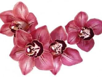 fiori – flowers_6
