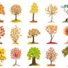 alberi – trees_1