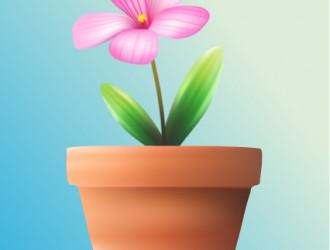 fiore nel vaso – flower in vase