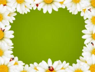 cornice con margherite – daisies' frame