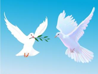 colombe – doves