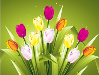 tulipani colorati – colored tulips