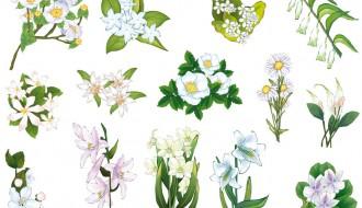 fiori bianchi – white flowers