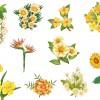 fiori gialli – yellow flowers_1