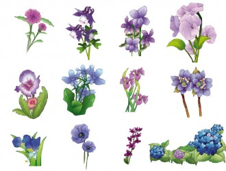 fiori viola – violet flowers