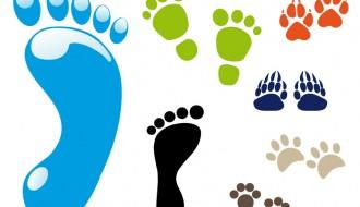 impronte – footsteps