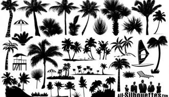 palme – palm trees