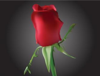 bocciolo rosa rossa – Romantic Rosebud