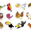 18 uccelli – 18 birds