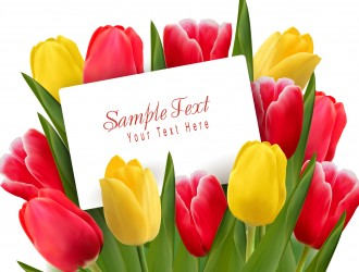 mazzo tulipani – Beautiful tulips flowers