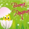 buona Pasqua pulcino in uovo – Easter chick in egg