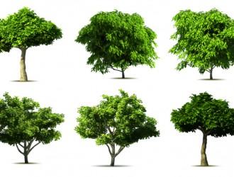6 alberi – realistic tree
