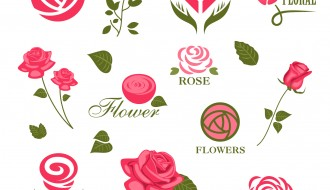 12 rose – roses