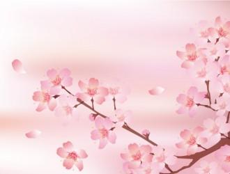 ramo, fiori ciliegio – sakura