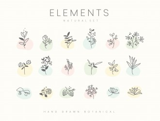 elementi botanici floreali – set hand drawn botanical elements