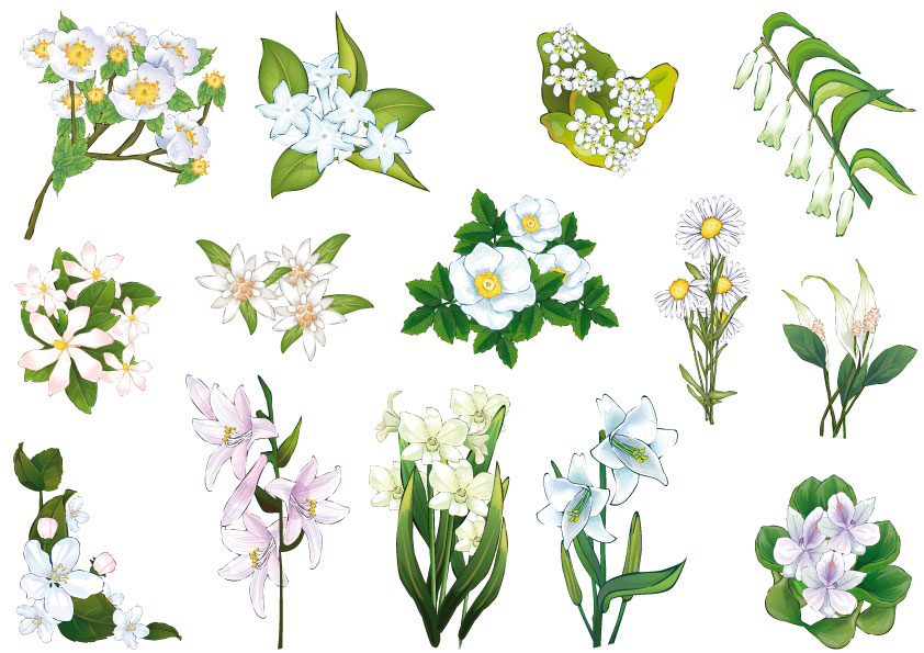 Fiori bianchi white flowers vettoriali free for Nomi di fiori bianchi