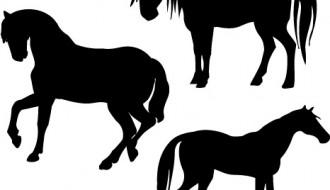 cavalli – horses
