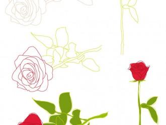 rose – roses