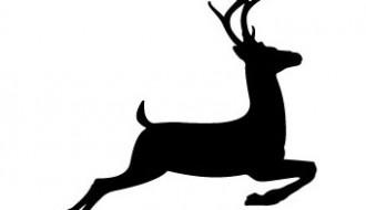 cervo – deer