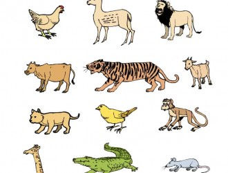 animali vari – animal set