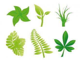 foglie – leaves