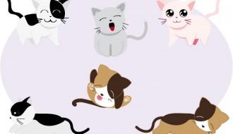 gatti – cats