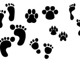 orme e impronte – footsteps and footprints