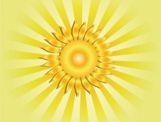 girasole – sunflower