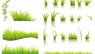 erba – grass_2