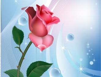 rosa rossa su sfondo azzurro – red rose on blue background