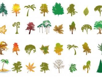 alberi – trees_6