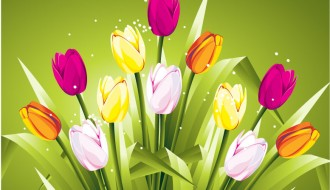 tulipani colorati – colored tulips