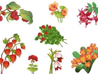 fiori rossi e arancioni – red and orange flowers