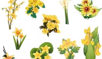 fiori gialli – yellow flowers