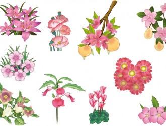 fiori rosa – rose flowers