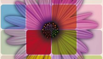 margherita colorata – colorful daisy