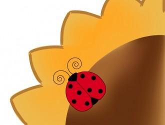 girasole coccinella – sunflower ladybugs