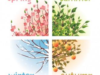 alberi 4 stagioni – trees with four seasons
