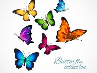 7 farfalle – colorful butterflies