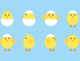 8 pulcini – chicks